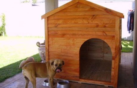 Dog Houses Gallery image 6